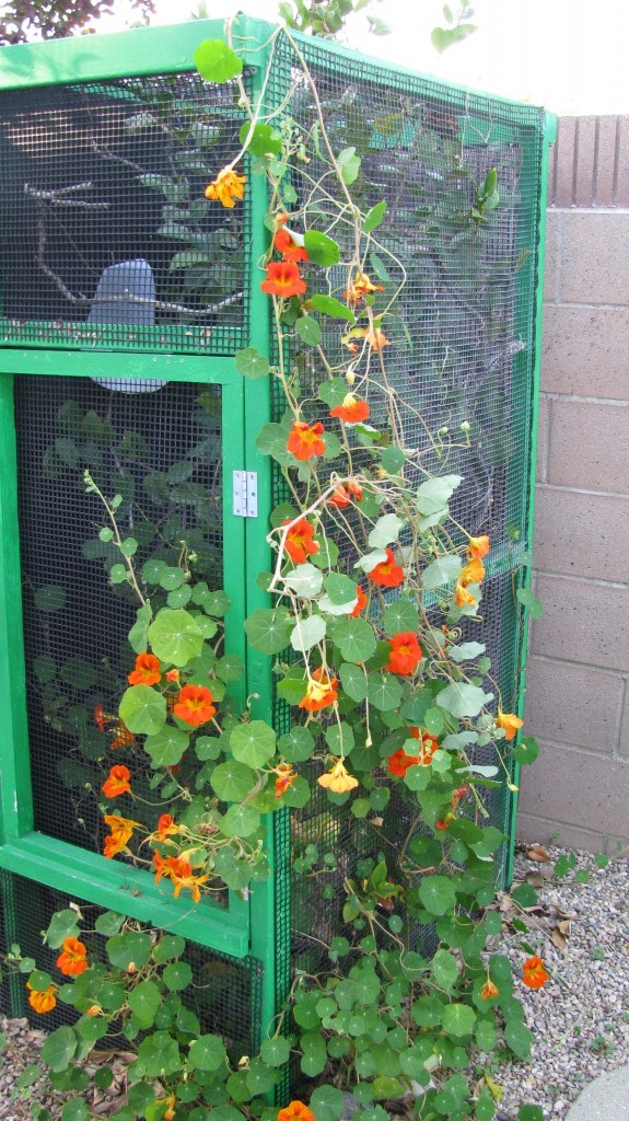 outdoor chameleon cage
