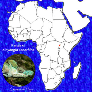 Kinyongia xenorhina range