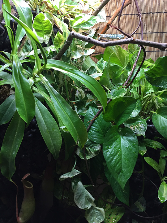 plants in the chameleon Cage