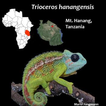 Trioceros hanangensis