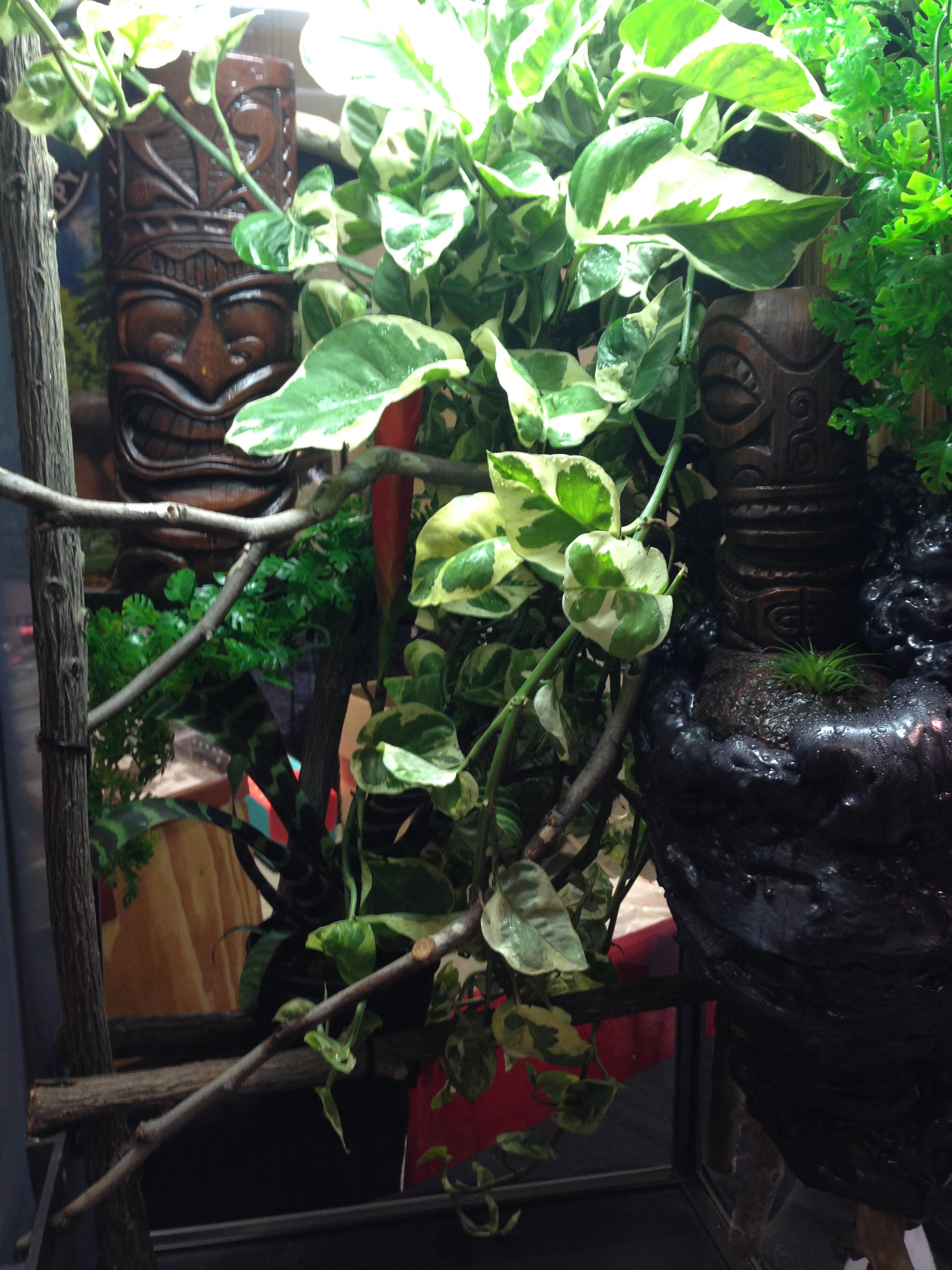 chameleon cage forest edge