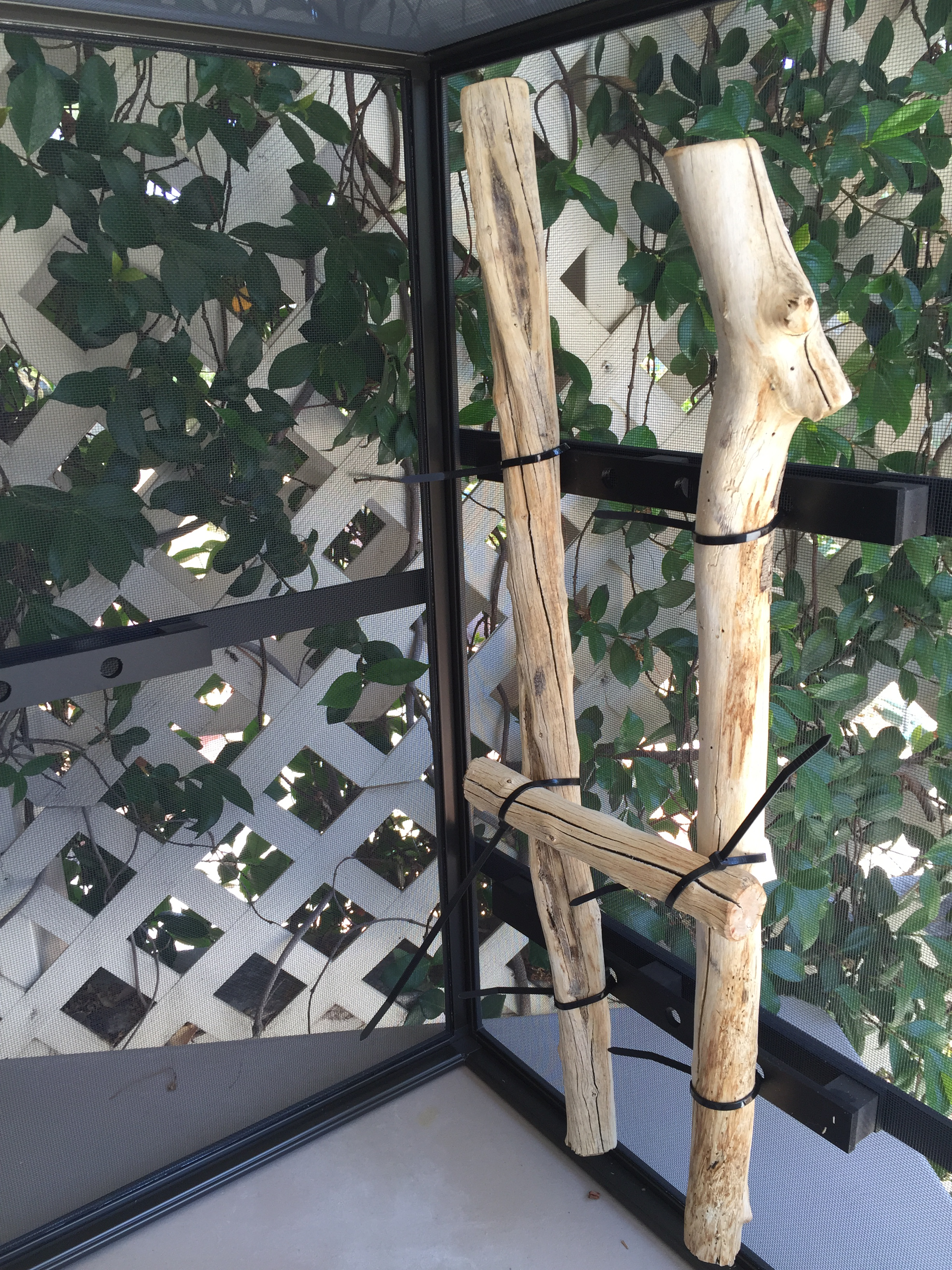 dragonstrand chameleon cage support branches
