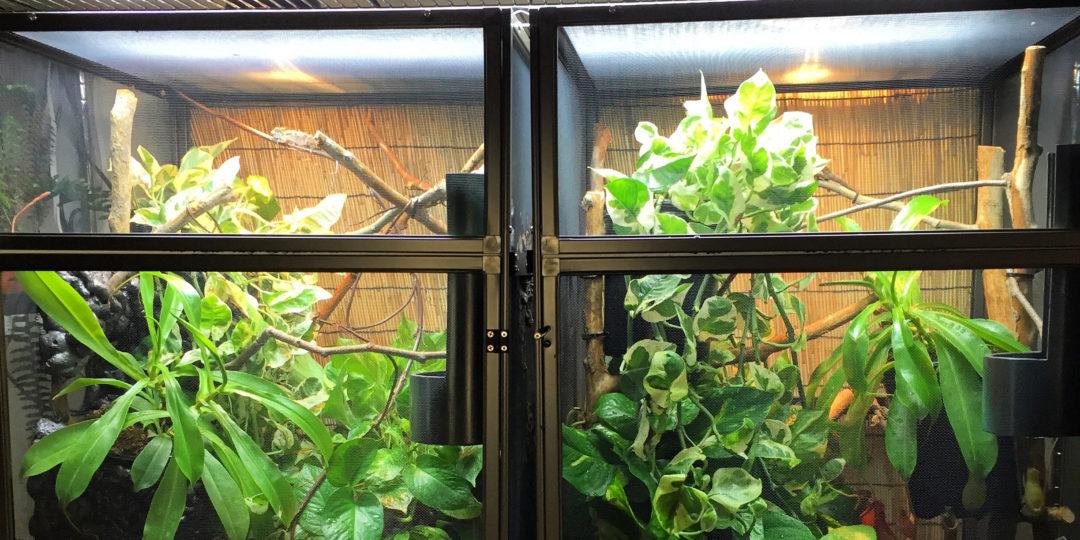 Chameleon Cage Pair