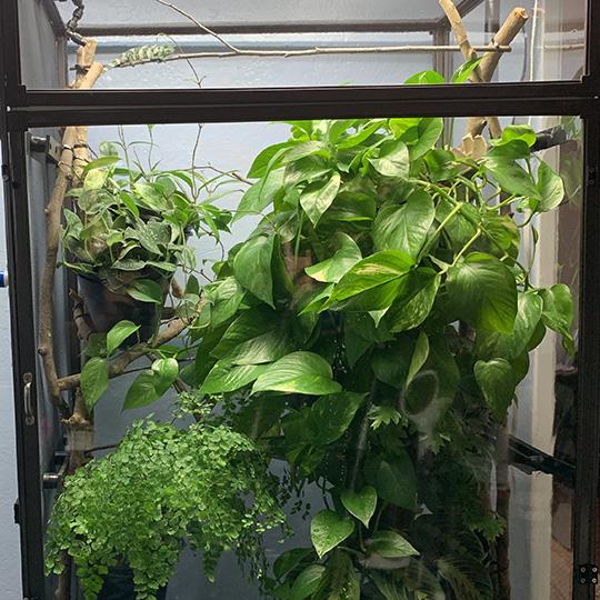 Medium Tall Clearside Atrium