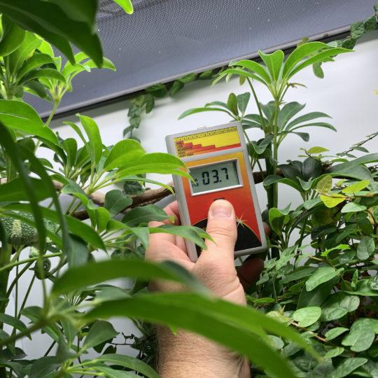 UVB Measurement in a chameleon cage