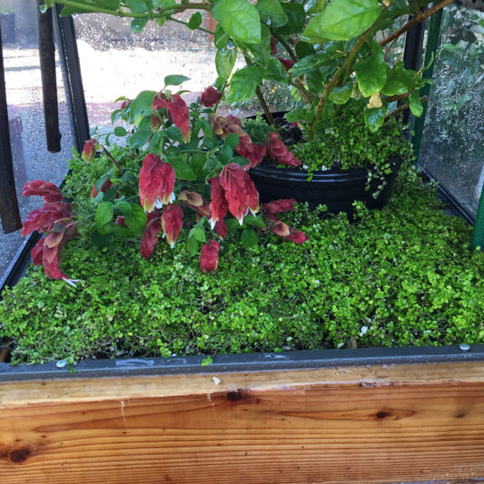 outdoors chameleon cage substrate