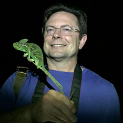 Bill and veiled chameleon in Florida