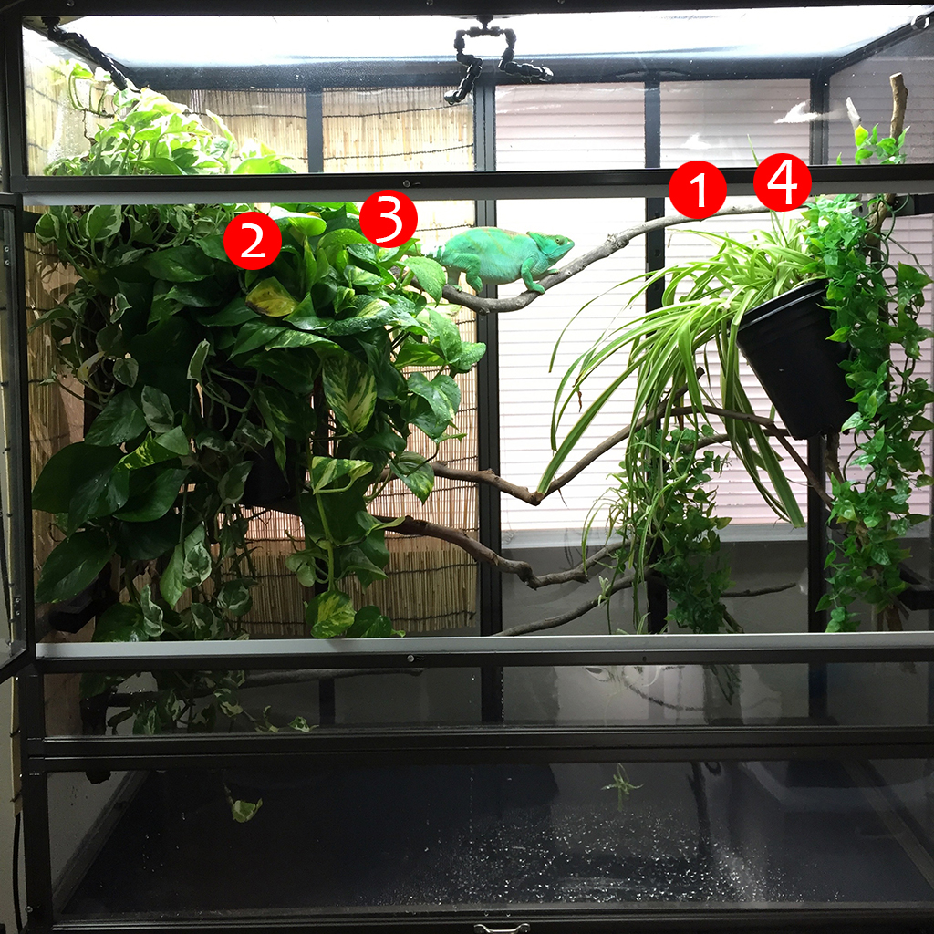 chameleon cage example