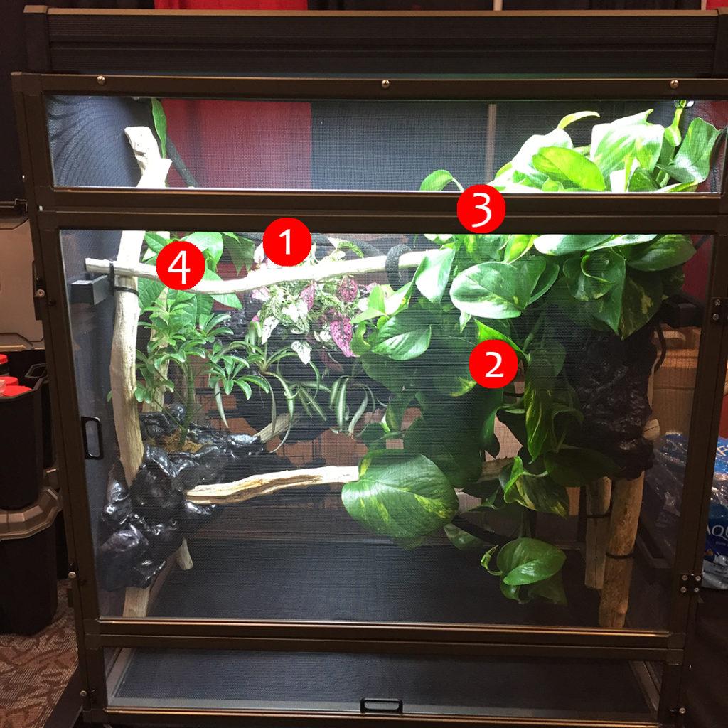 chameleon cage example