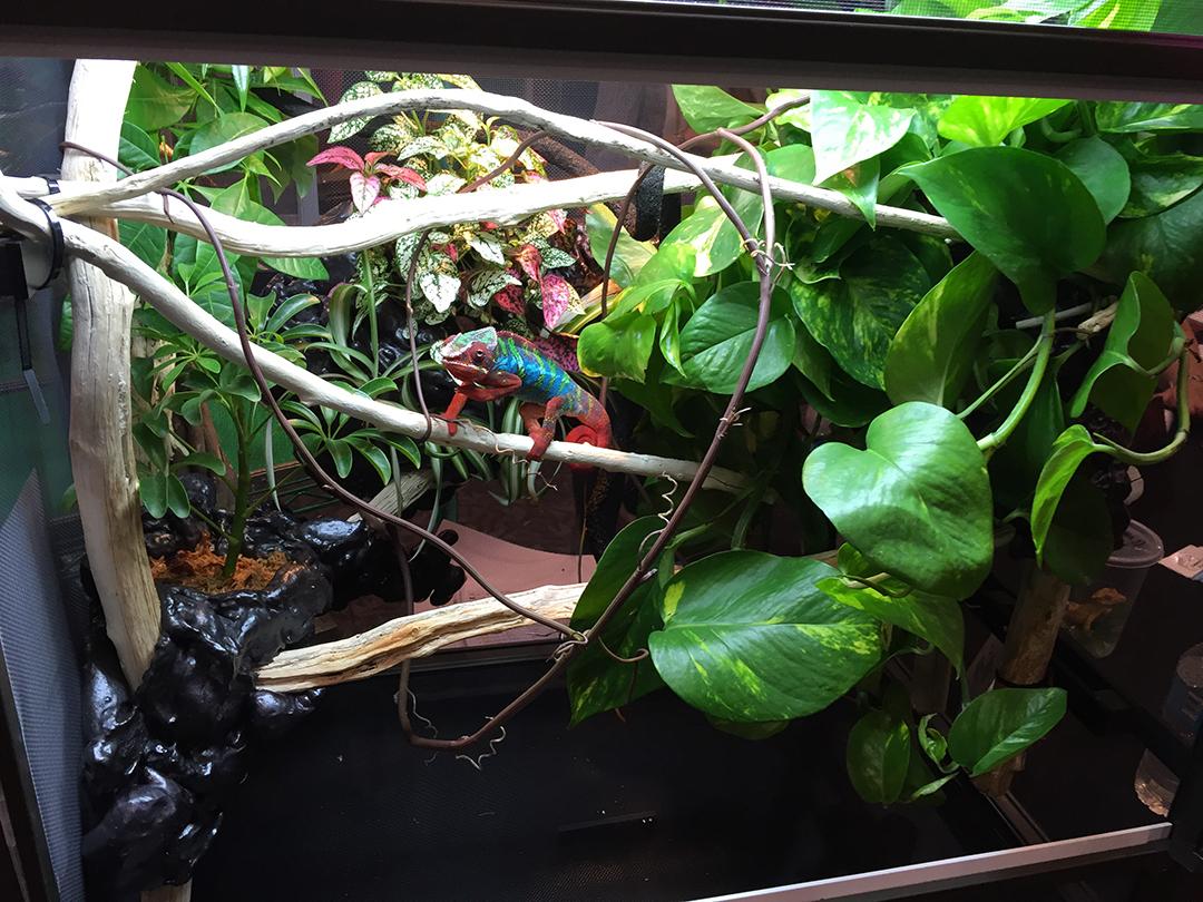 wide format chameleon cage