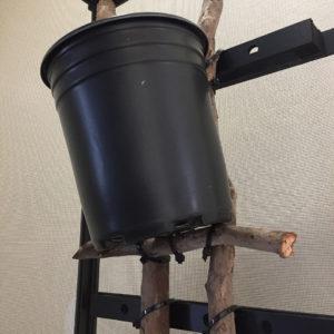 pot nestled in Dragon Ledges