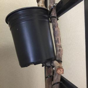 crossbar branch for pot