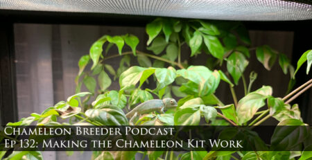 making the chameleon kit to work