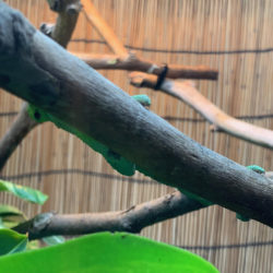 Hiding Behind Branch 121