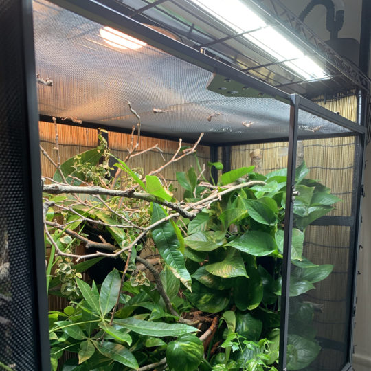 Placement of hydration mount for chameleon cage