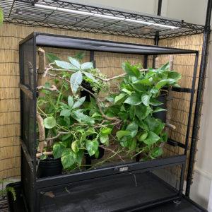 Exo Terra Cage Build