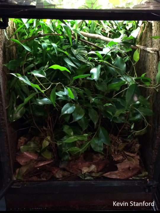 Dense foliage in glass chameleon cage