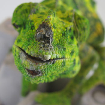 Meller's Chameleon with horn rubbed off.