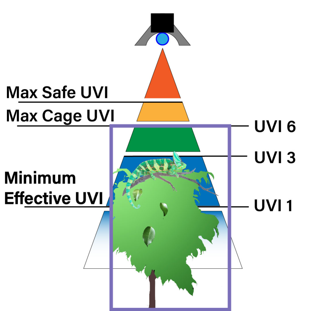 UVB Zones with Chameleon Cage