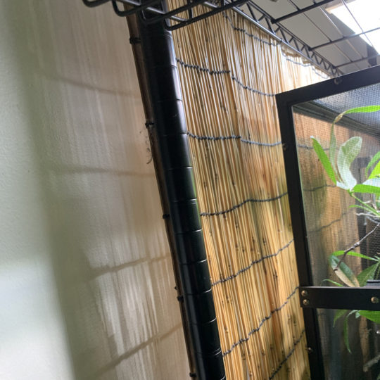 Bamboo mat protects the wall behind the chameleon cage