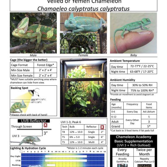 Veiled chameleon caresheet image