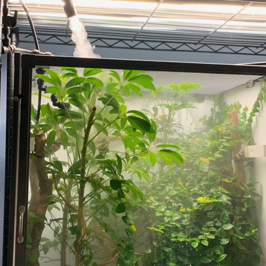 fogging a hybrid cage