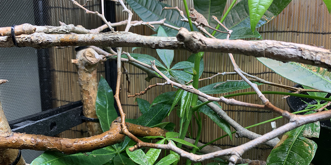 Installing Netowrk branches in a chameleon cage