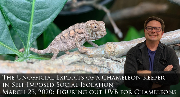 Figuring out UVB for Chameleons