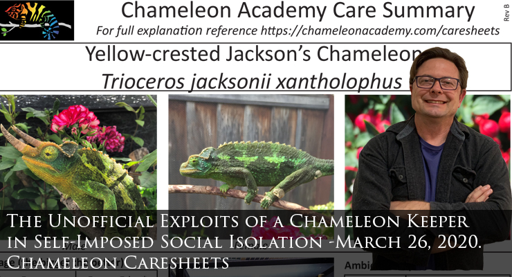Chameleon care sheets
