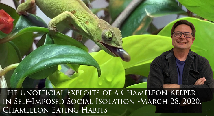 Chameleon Eating Habits