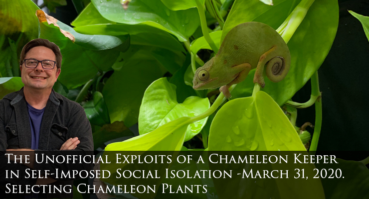 Selecting chameleon plants