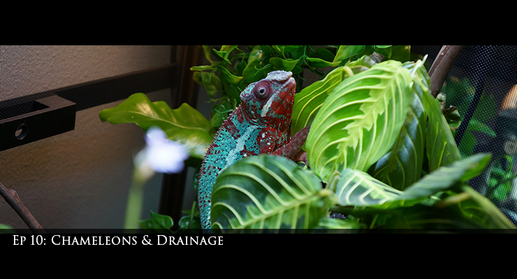 Chameleons and Drainage