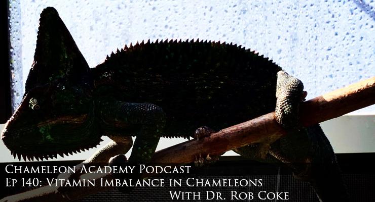 vitamin imbalance in chameleons