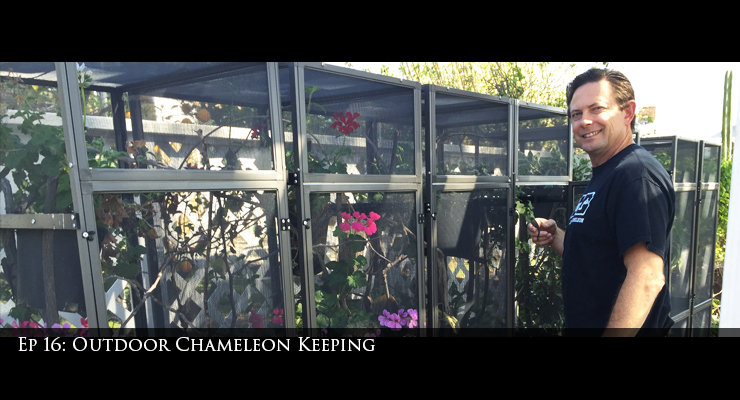 Outdoor Chameleon Caging