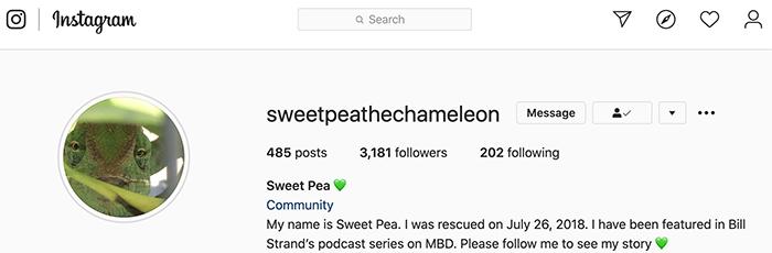 Sweet Pea Instagram