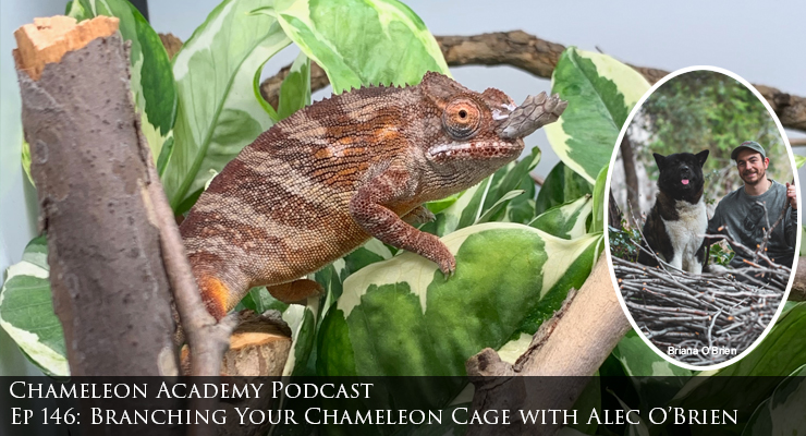 branching a chameleon cage