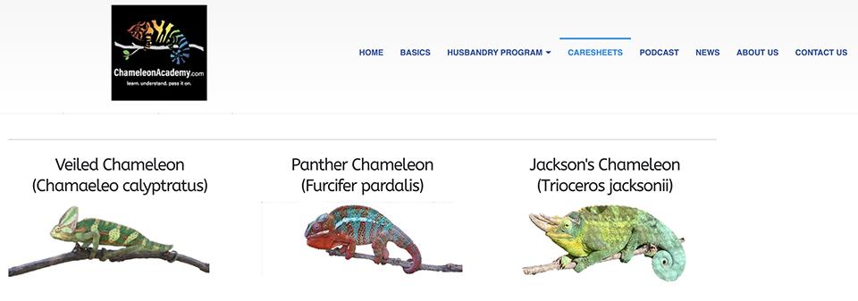 chameleons caresheets