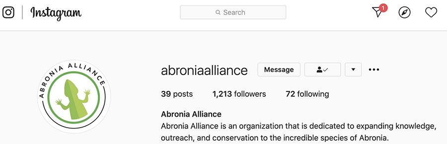 Abronia alliance instagram