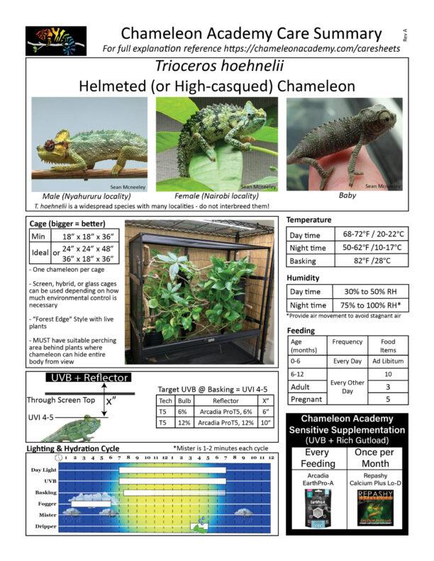 trioceros hoehnelii care summary