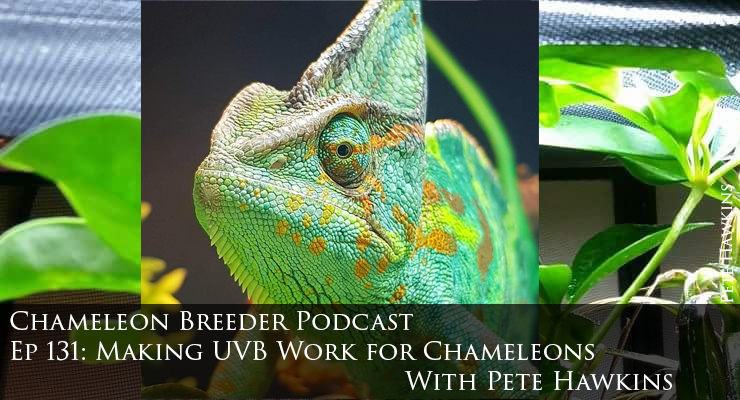 making UVB work for chameleons