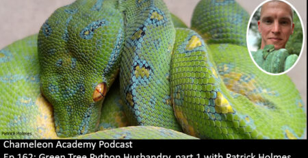 Green Tree Python husbandry