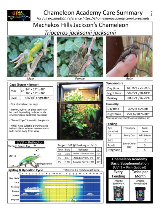 Machakos Hills Jacksons Chameleon care summary