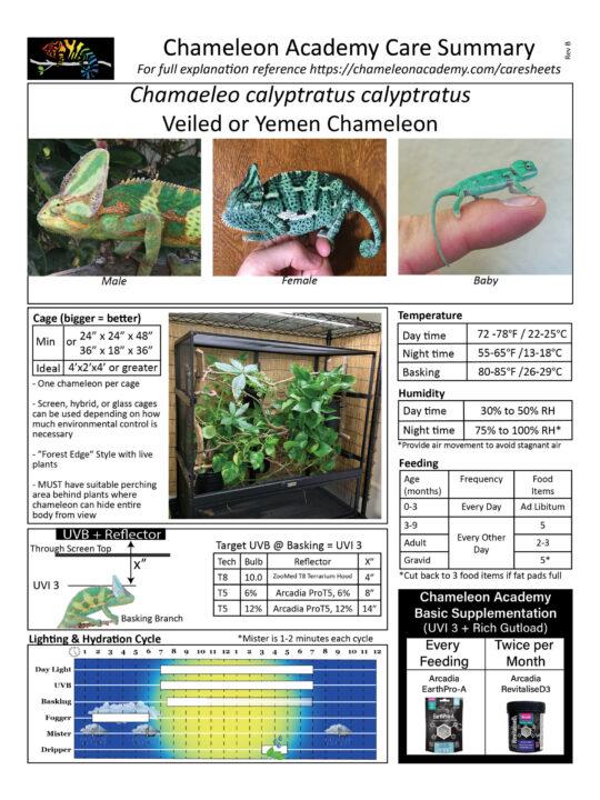 veiled chameleon care summary