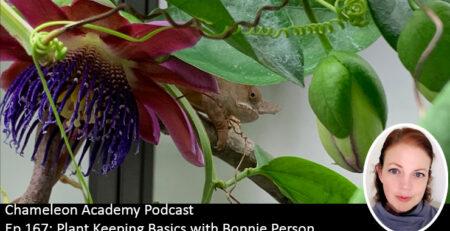 Plants and chameleons