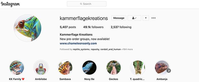 Instagram Chameleon