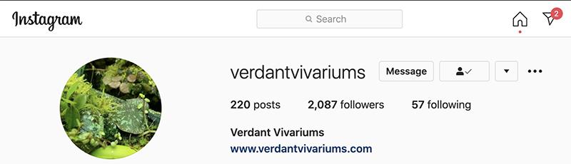 verdant vivariums
