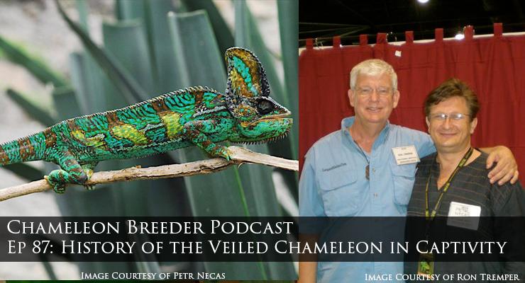 Veiled Chameleon and Ron Tremper
