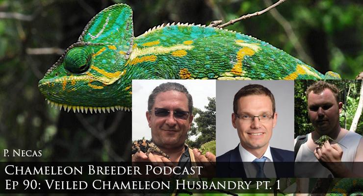 Veiled Chameleon Husbandry