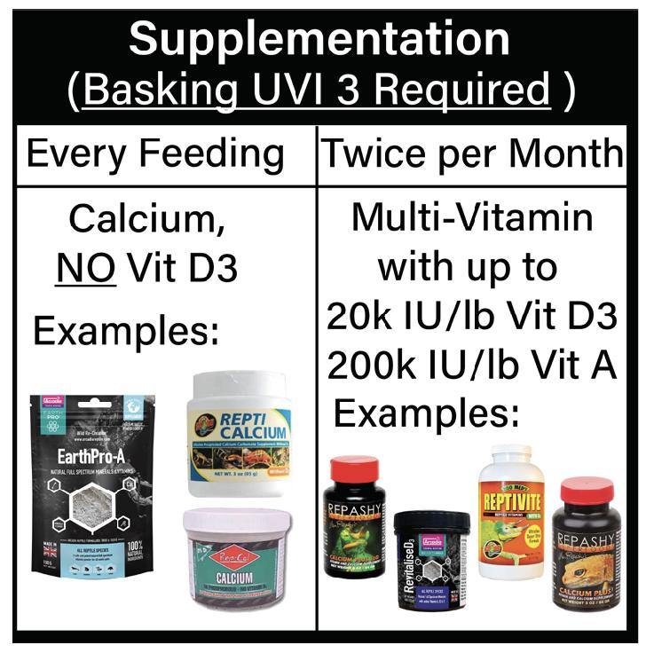 panther chameleon supplementation