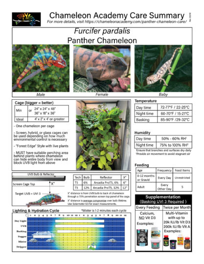 Panther Chameleon Care summary